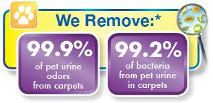 Chem-Dry of Columbia Pet and Urine Removal graph